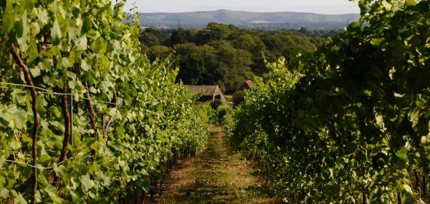 Bolney Wine Estate Vineyard