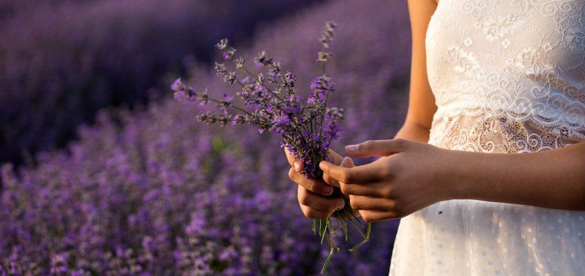 Visit a lavender Farm